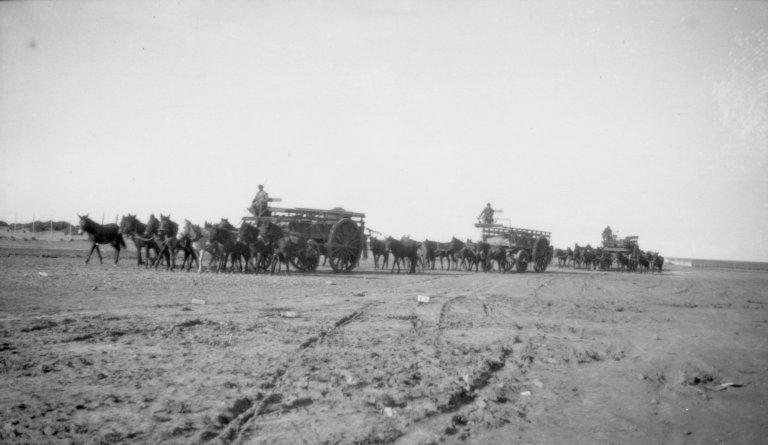 Wool Wagons