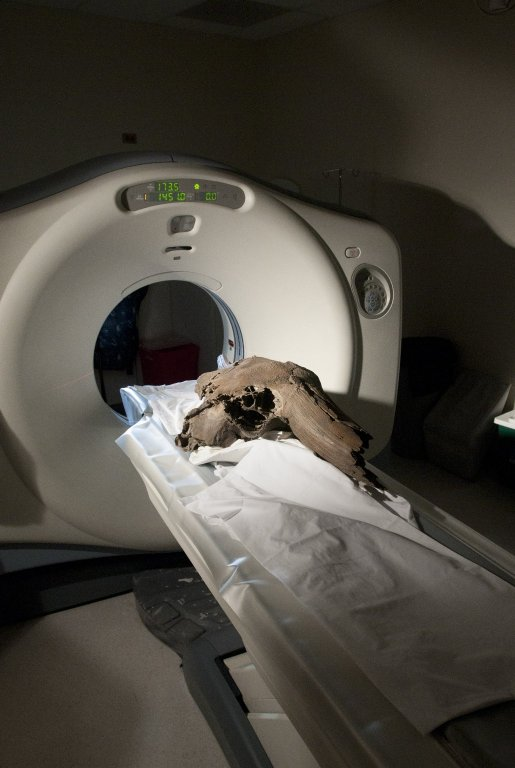 Scanning Bison Skull
