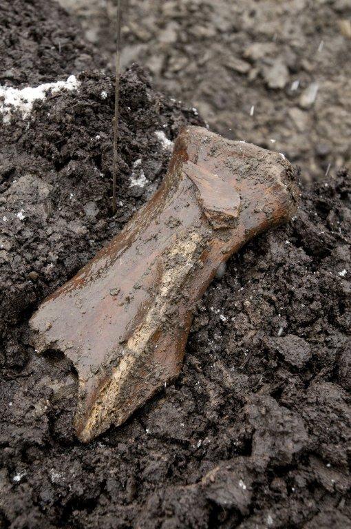 Snowmastodon Excavation, Fossils
