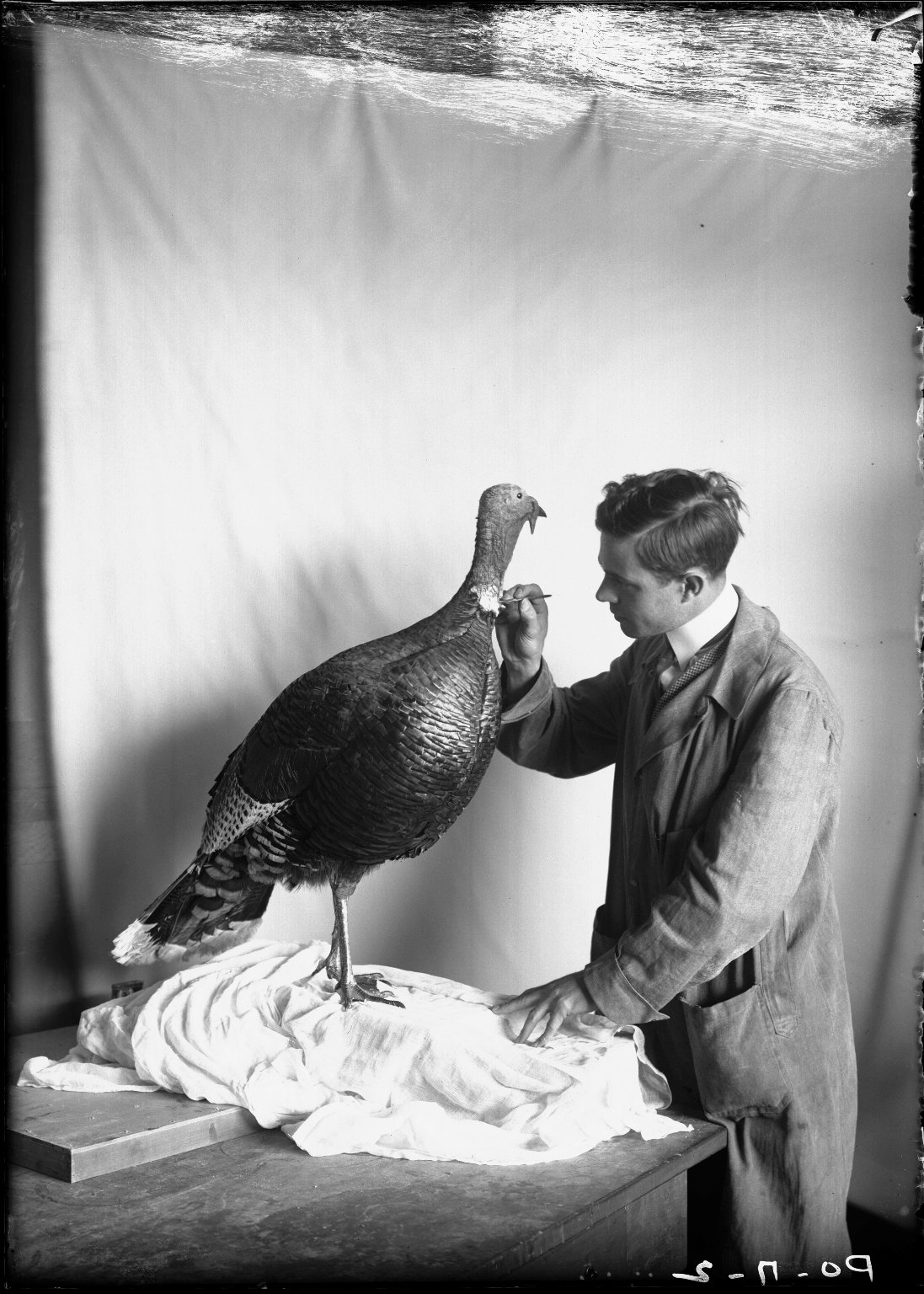 Mounting specimens for Turkey group