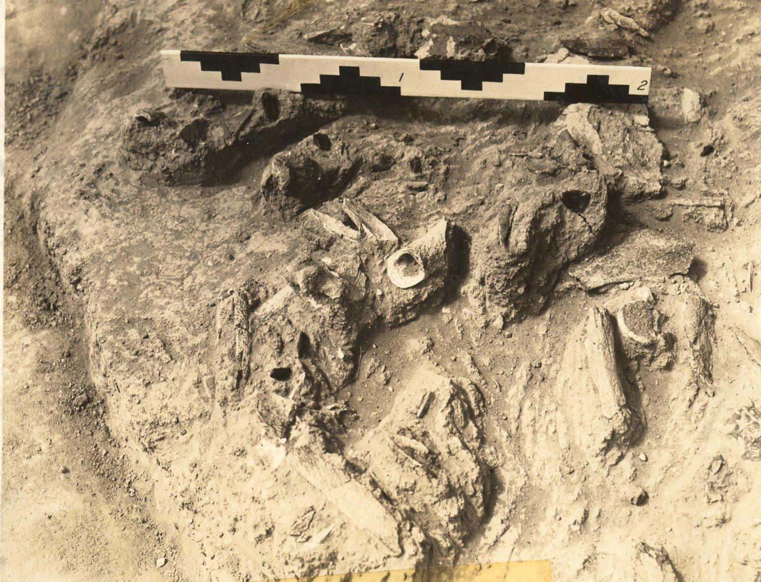 Artifacts in situ