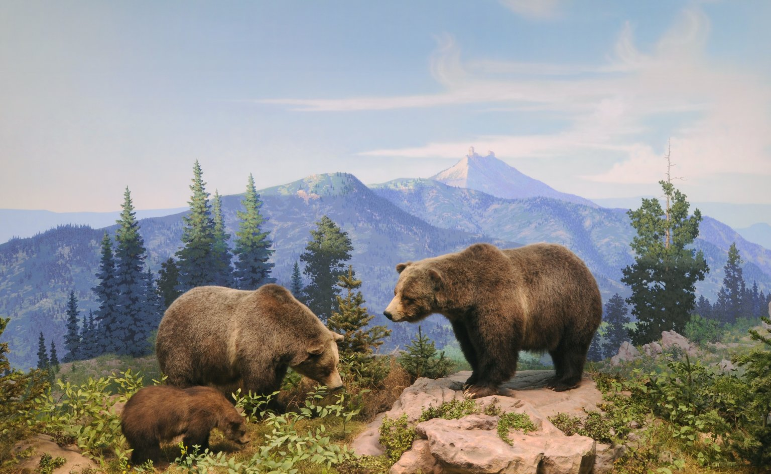 Colorado Grizzly BearGroup Diorama