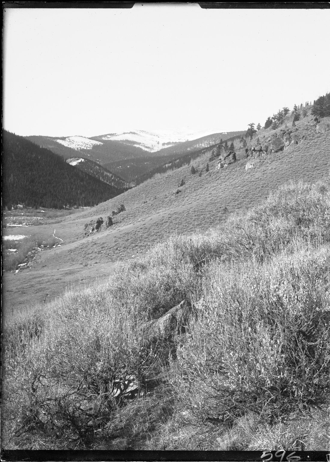 Sagebrush hillside