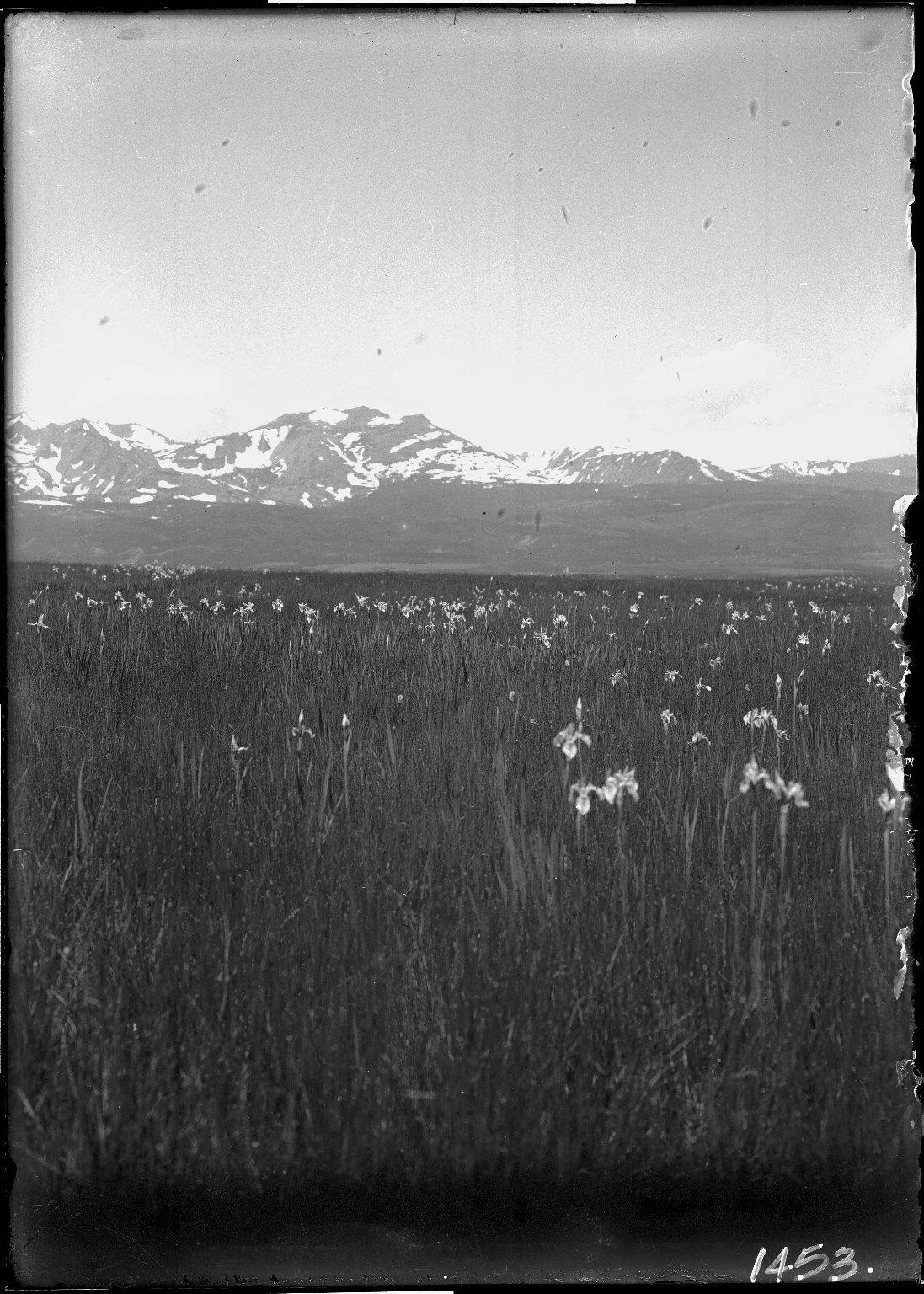 Mt. Zirkel and Wild Iris