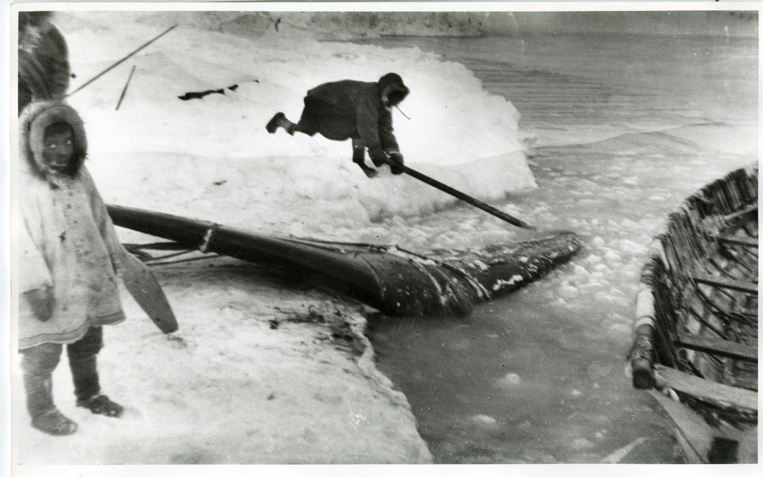 Eskimo whalers hauling whale ashore