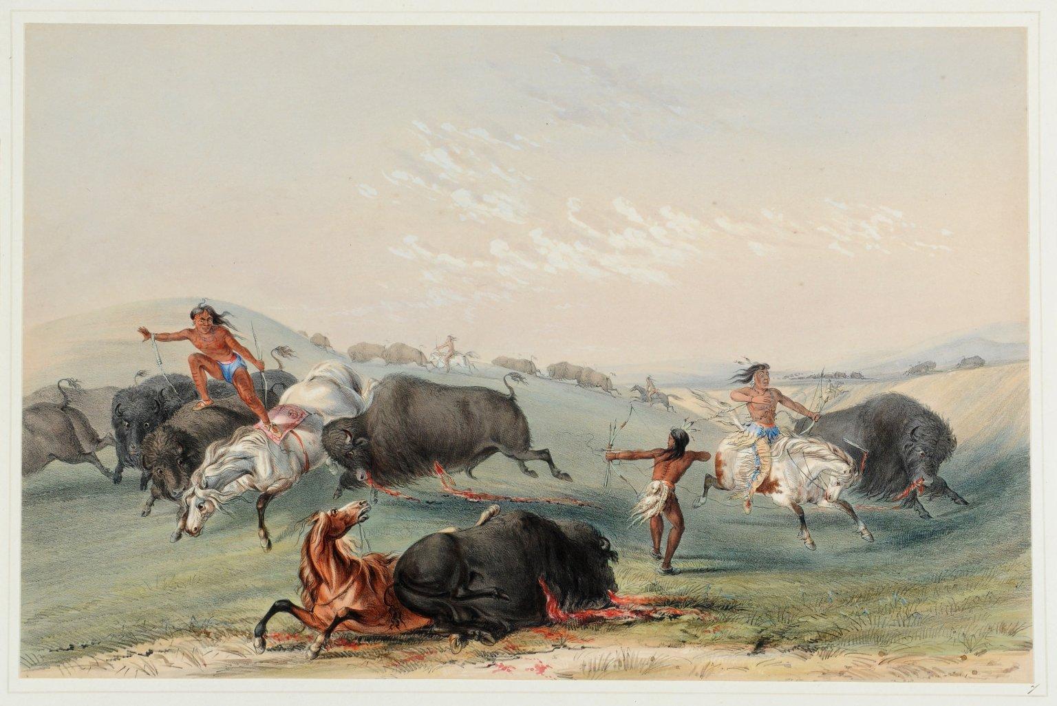 Buffalo Hunt. A Numerous Group.