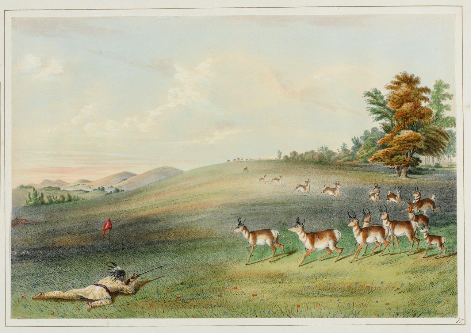 Antelope Shooting.