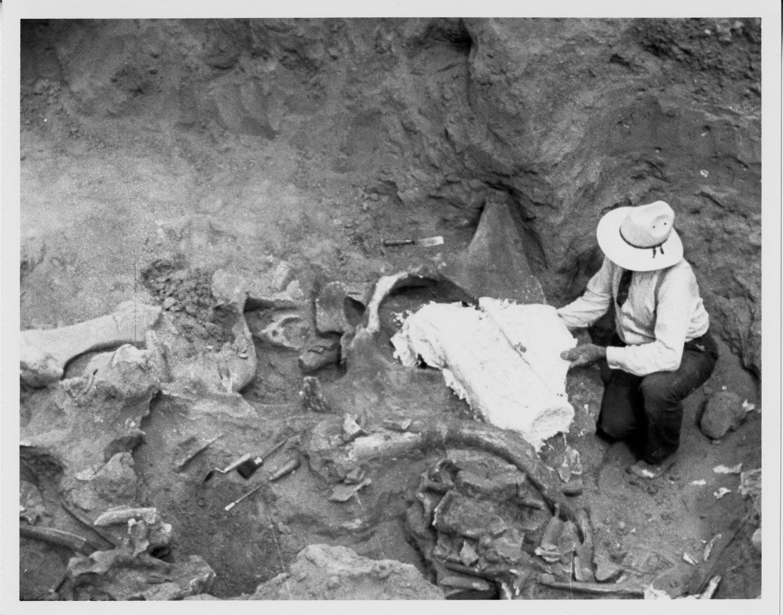 Plastering Fossil In Situ