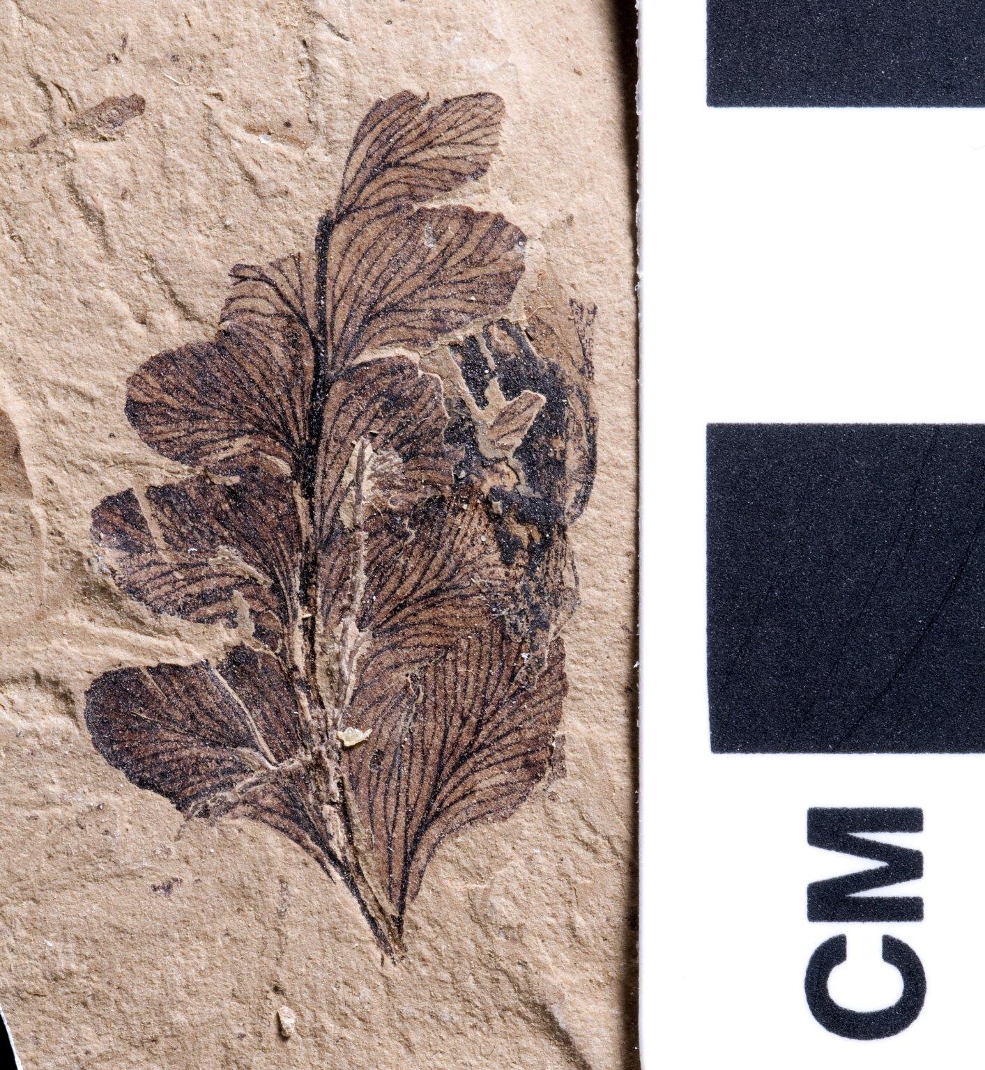 PC059 - leaf