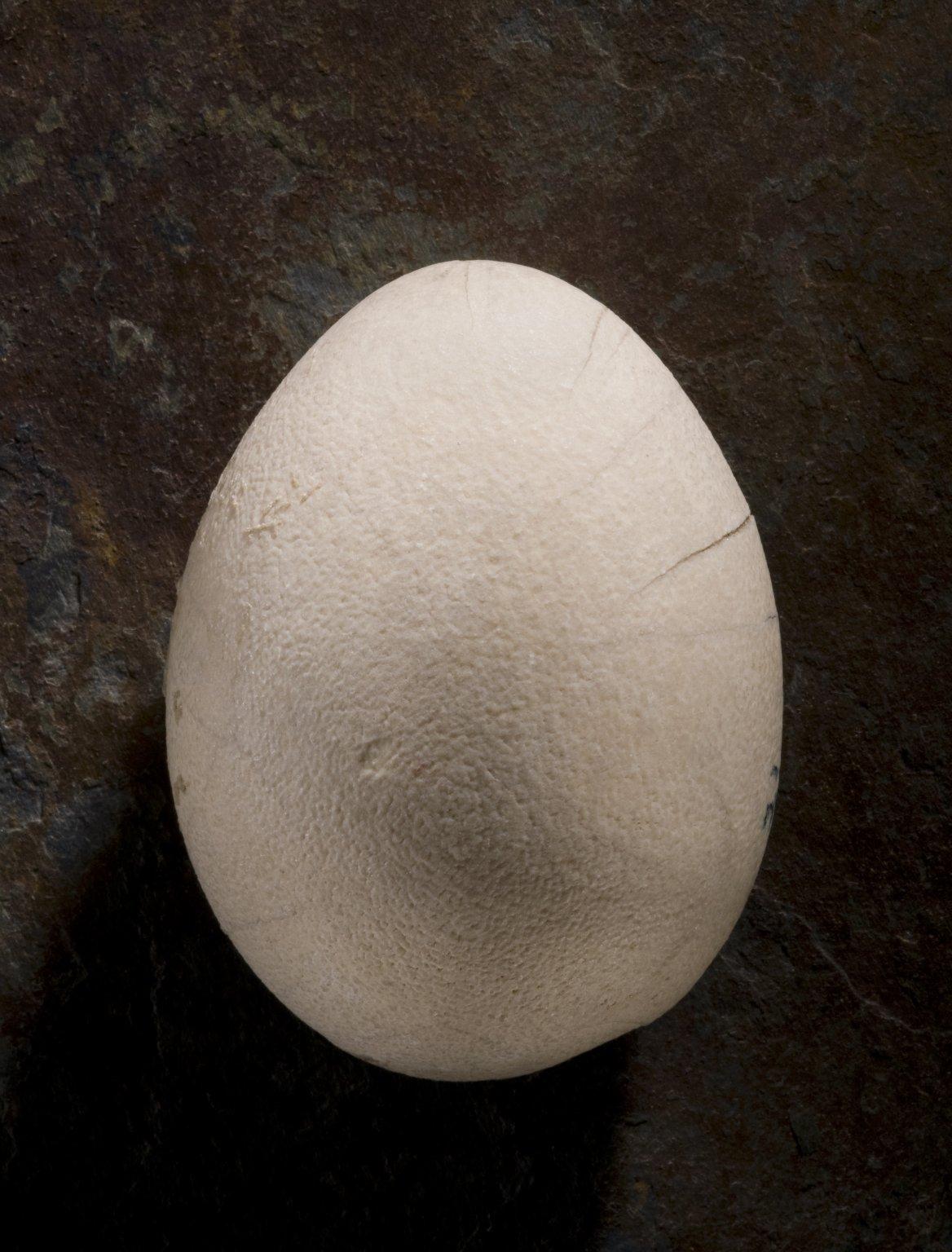 Fossil Bird Egg, Side A