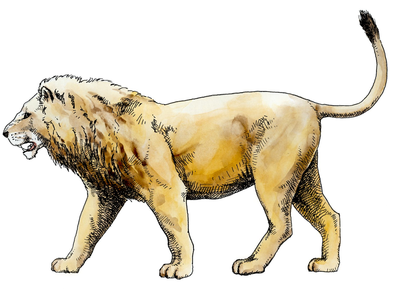 American Lion, Ice Age Mammal