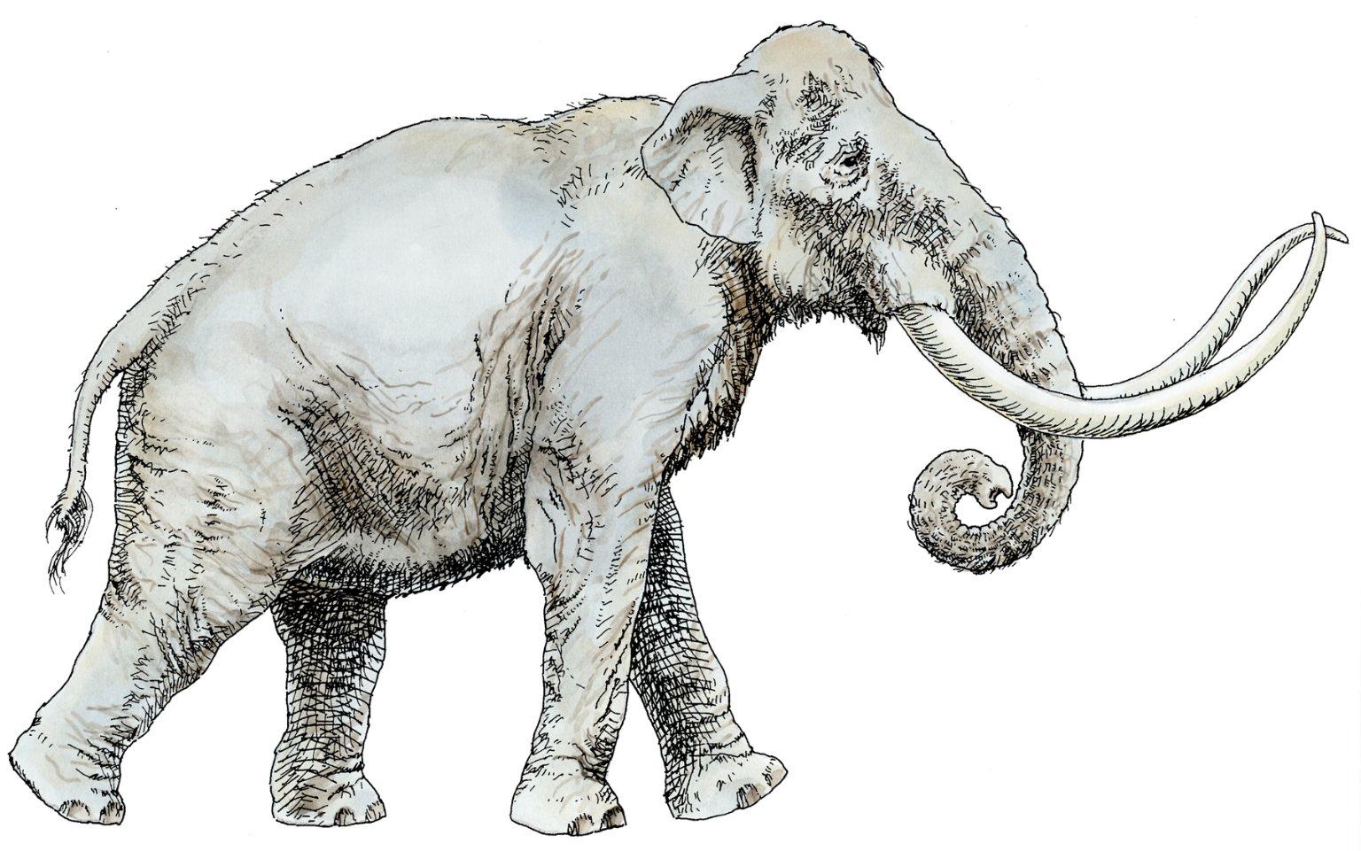 Columbian Mammoth, Ice Age Mammal