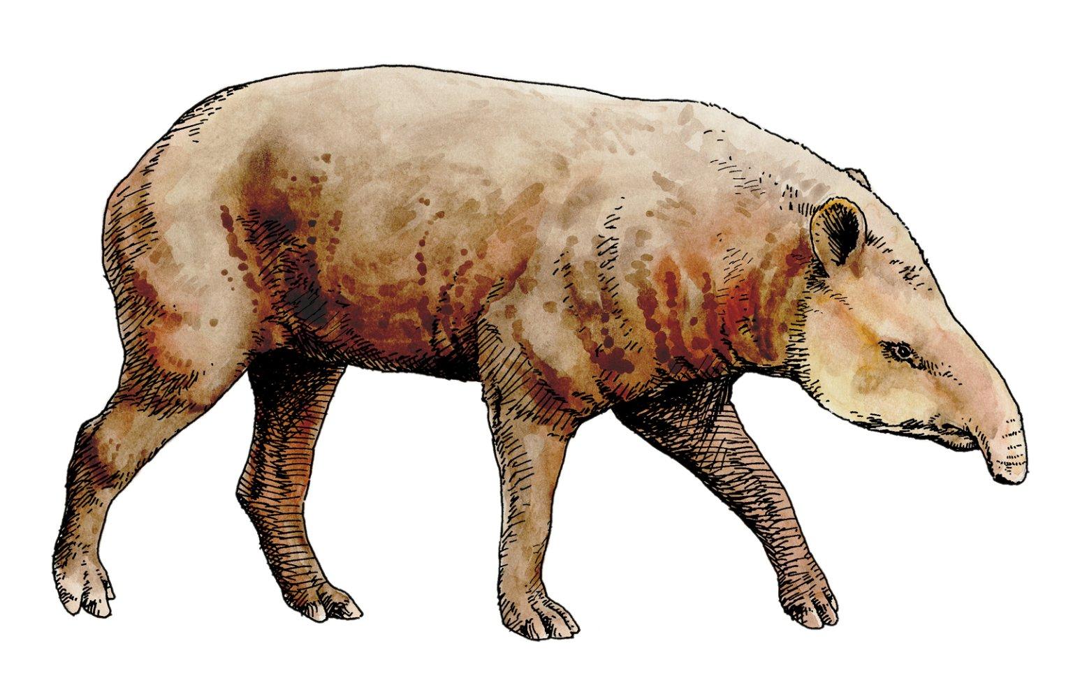 Tapir, Ice Age Mammal
