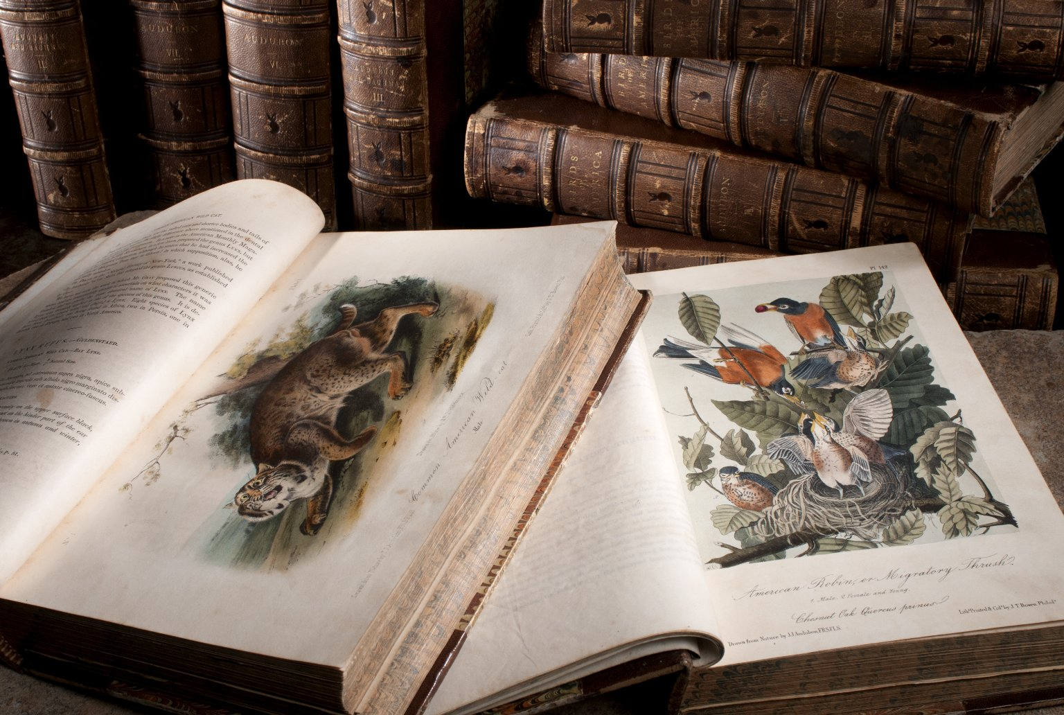 Montage of rare books by John James Audubon