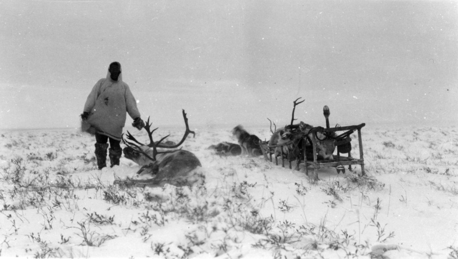 Kogmukwith caribou collect for group