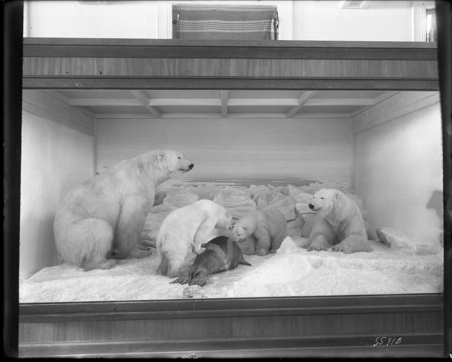 Polar bear group