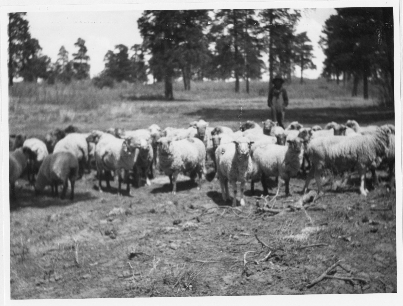 Jesse Valdez with sheep