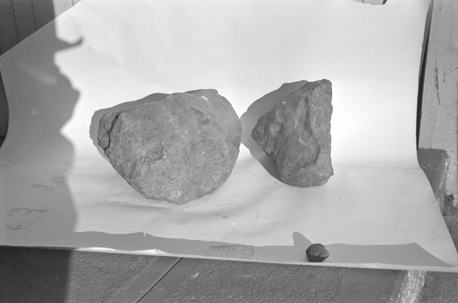 Two specimens