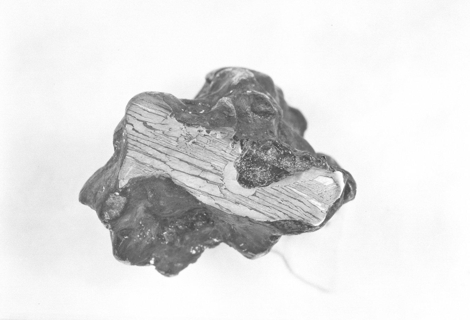 Specimen from Glorieta Mtn., NM