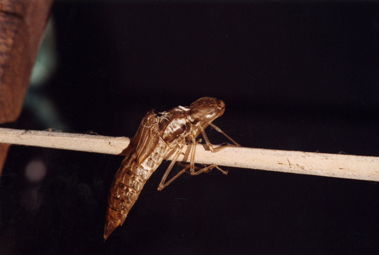 Close up of unidenitified insect on stalk