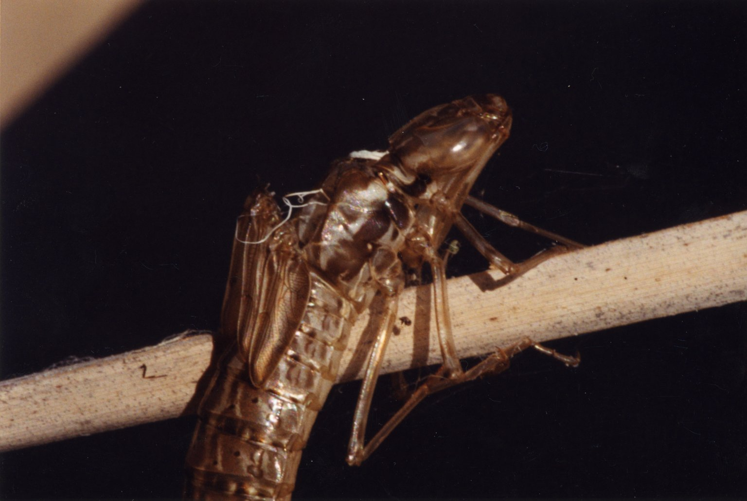Close up of unidentified insect on stalk