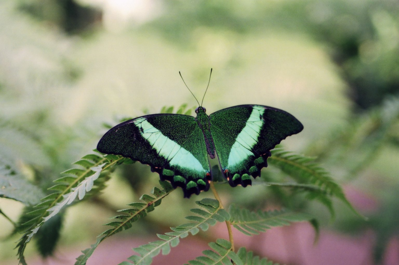 Close up of green butterfly on leaf