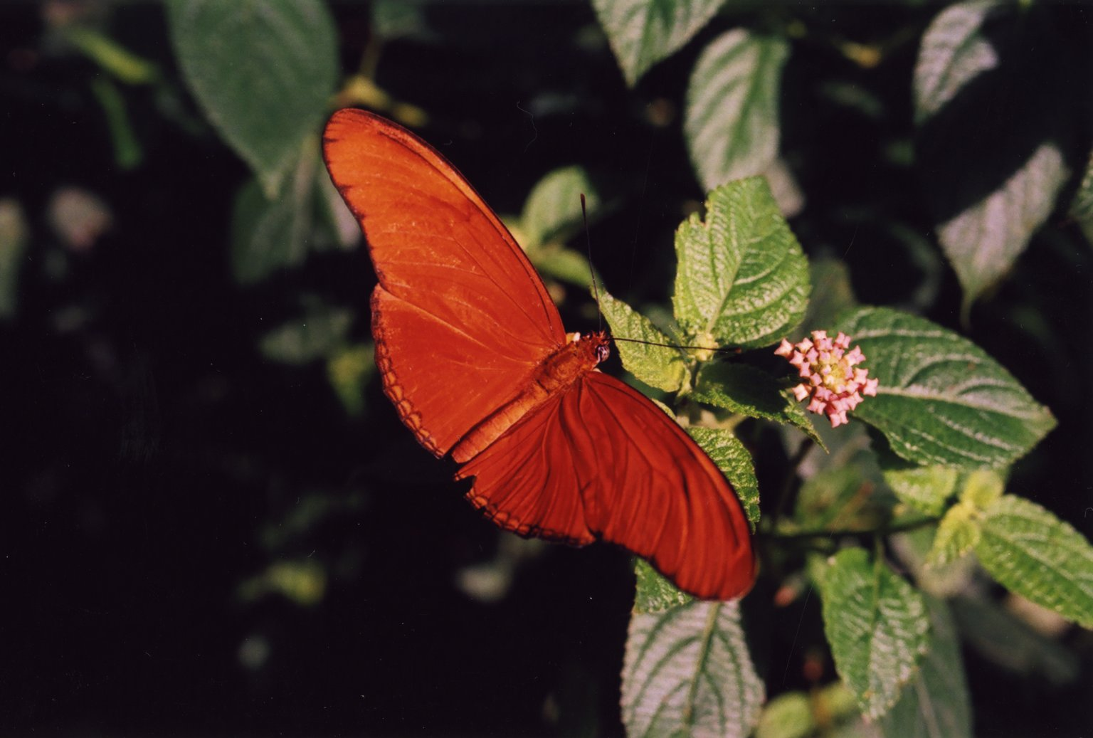 Image of orange and white butterfly on flower