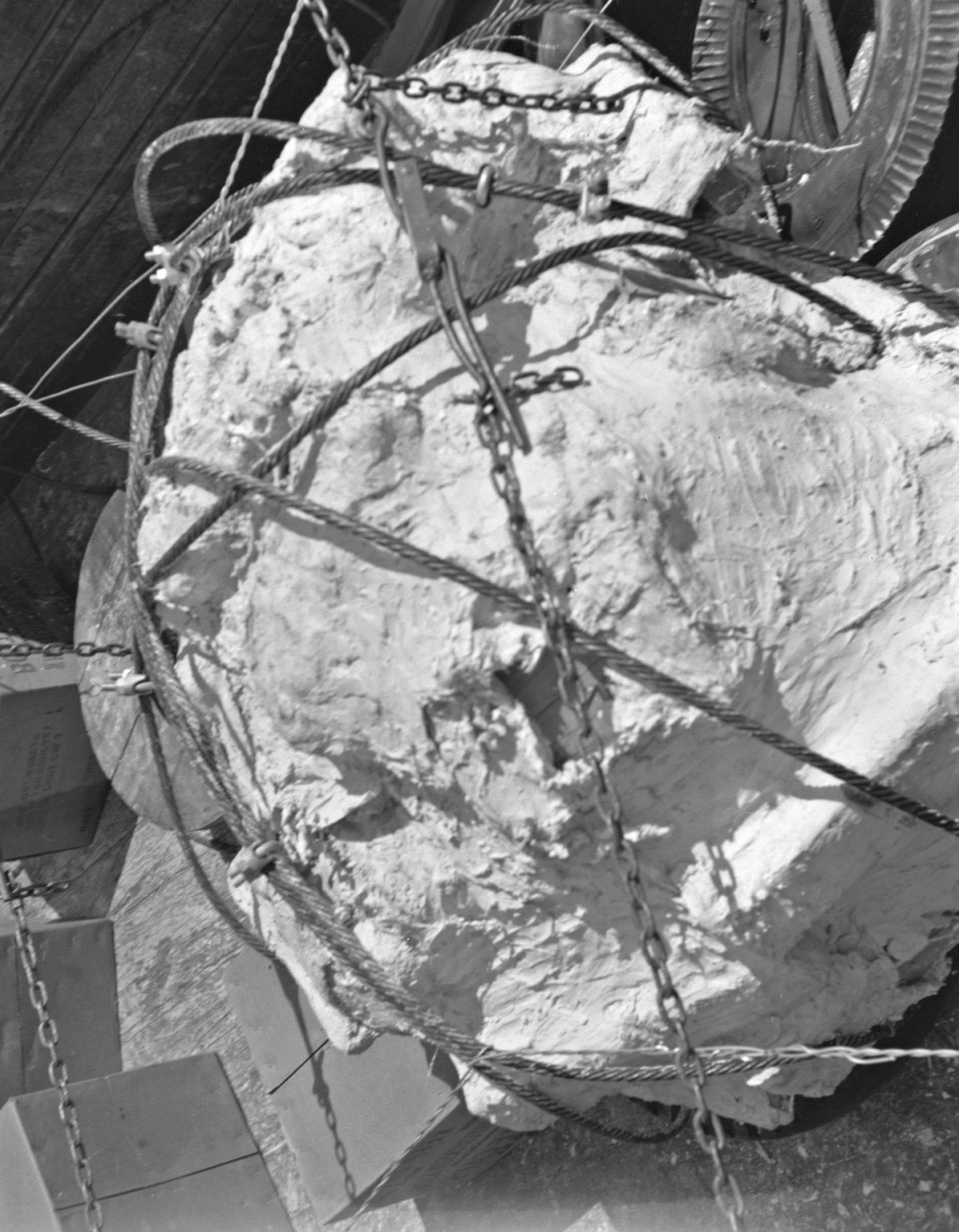 Specimen 'plastered' for removal