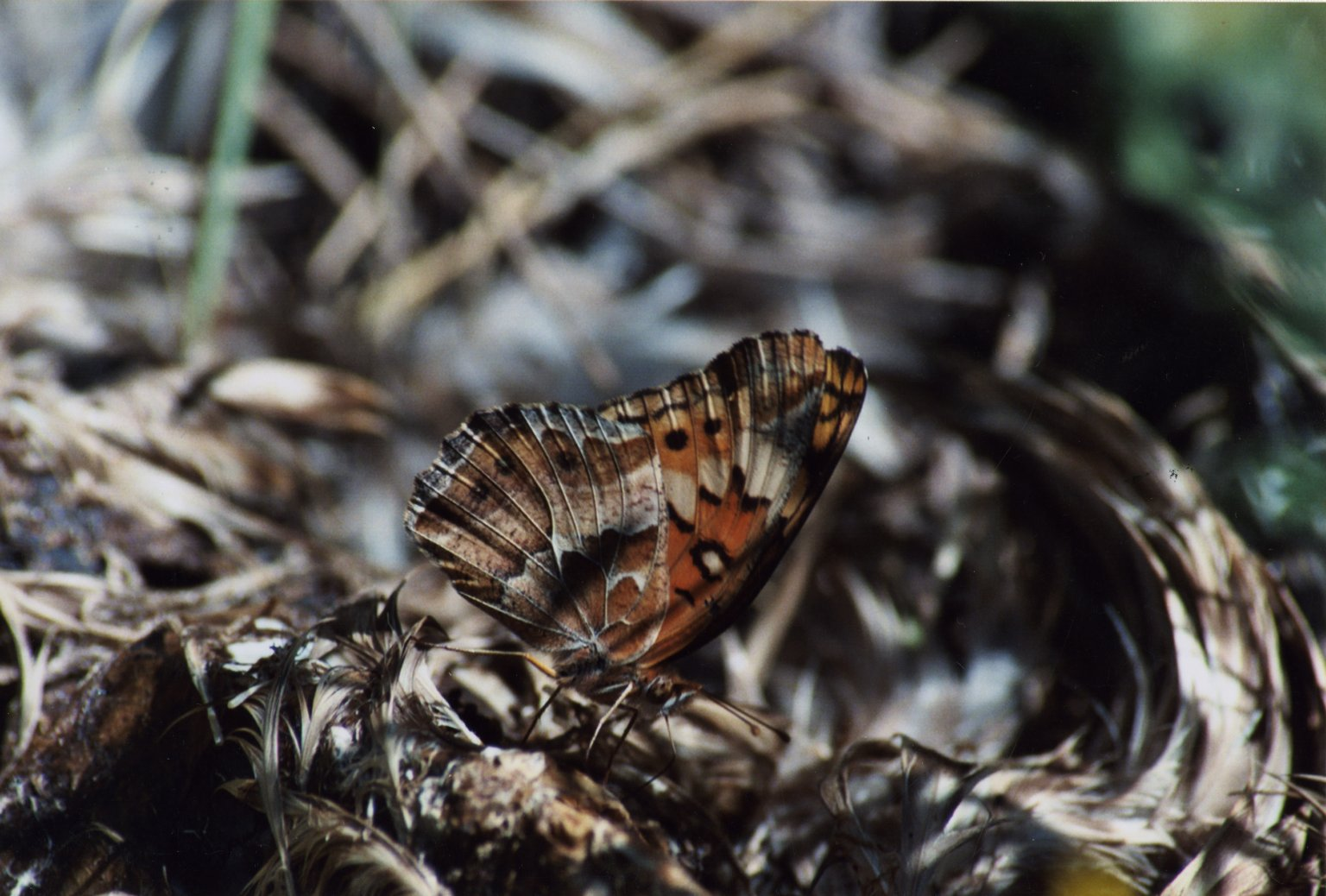 Close up of unidentified brown butterfly