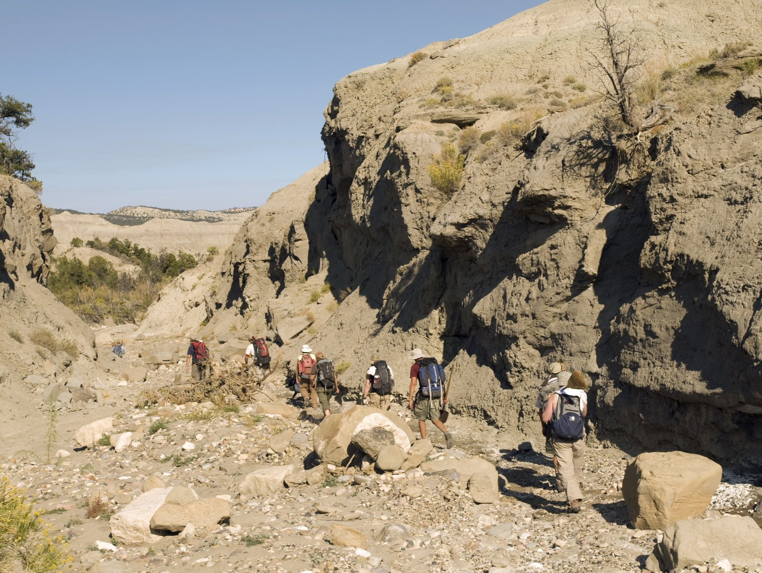 A team of unidentified DMNS Volunteers and Curators trudge along a stream bed carrying their tools with their packs full of specimens in the Kaiparowits Plateau.