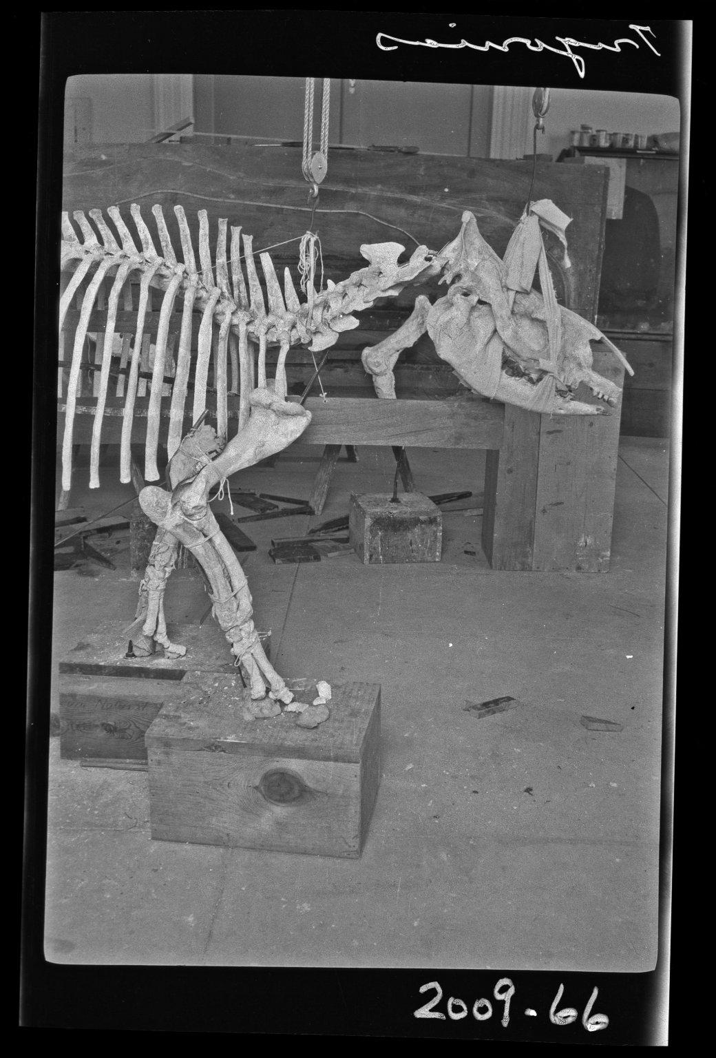 Working on Trigonias in Bone Lab