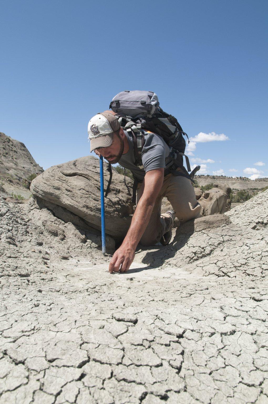 Dr. Joseph Sertich, DMNS Curator of Vertebrate Paleontology, closely examines a potential specimen.