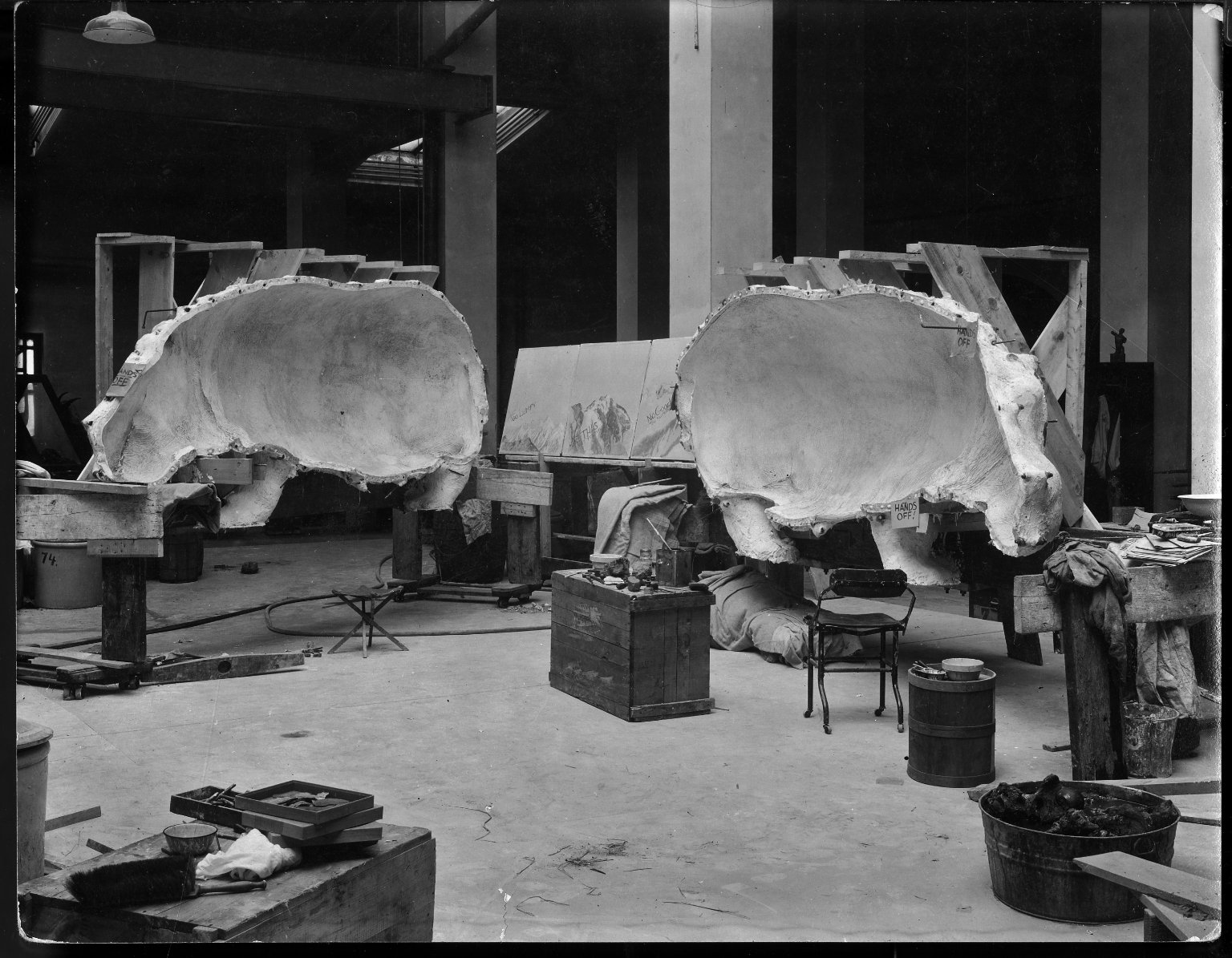 Mount being prepared for hippopotamus exhibit at The Field Museum