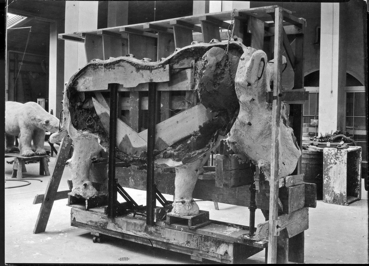 Mount being prepared for exhibit at The Field Museum