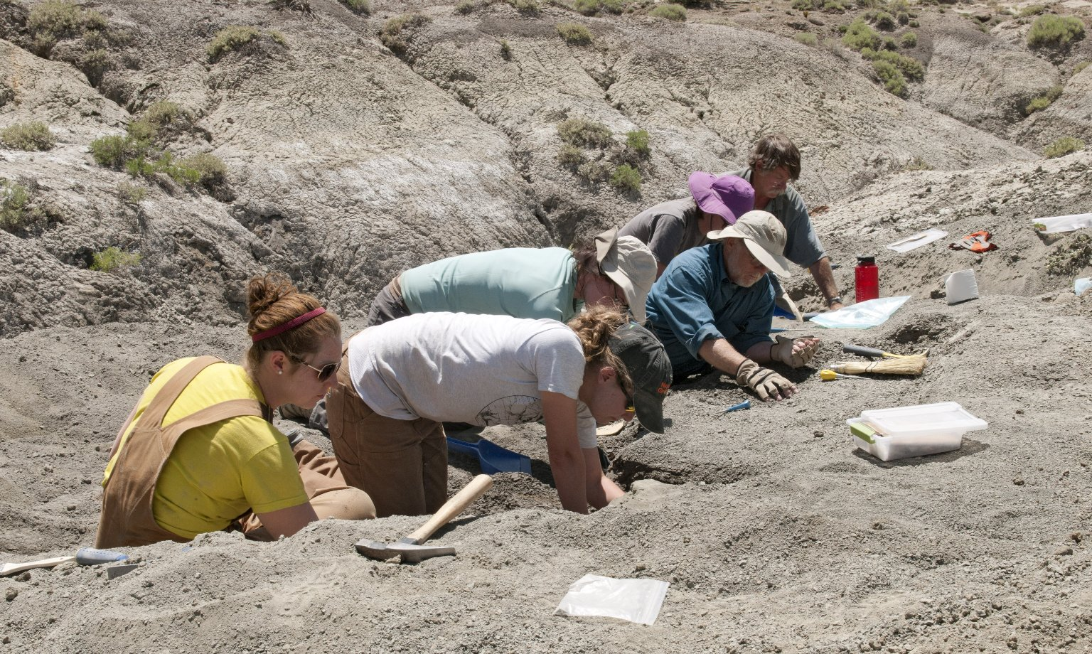 The DMNS Team works on excavating a site.