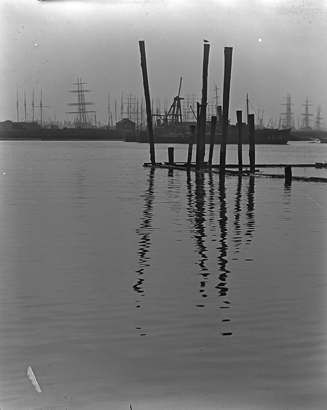 Reflections of wooden piles