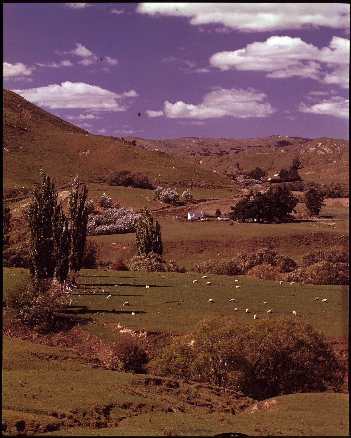 Wairarapa farmlands