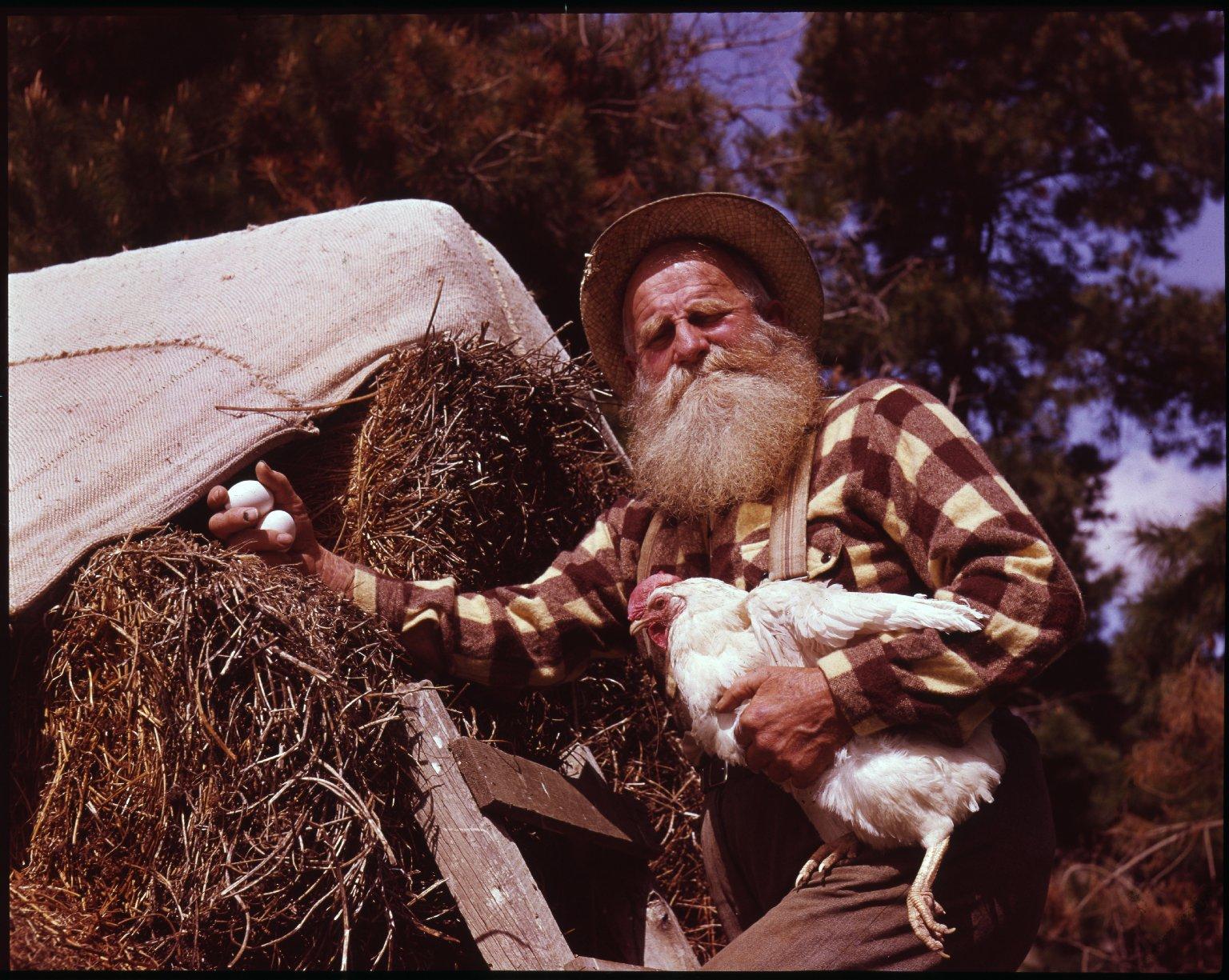 Farmer collecting egg