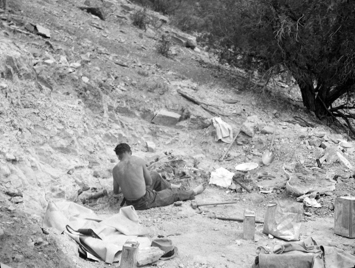 Excavation of Stegosaurus from Garden Park, Colorado