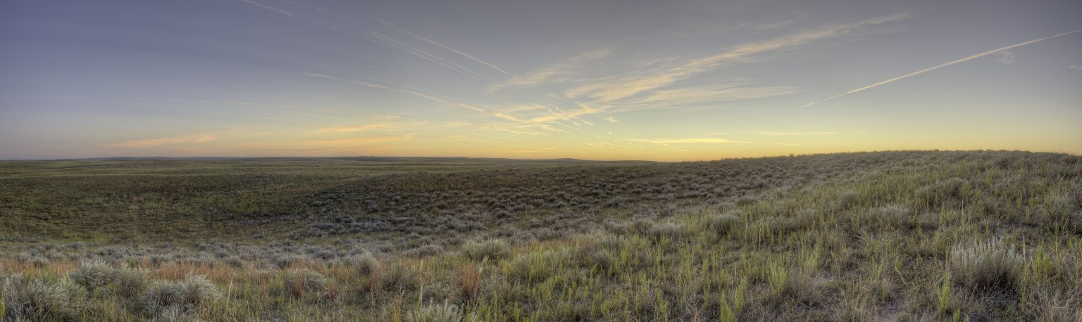 Field Location for the Greater Prairie Chicken Diorama.