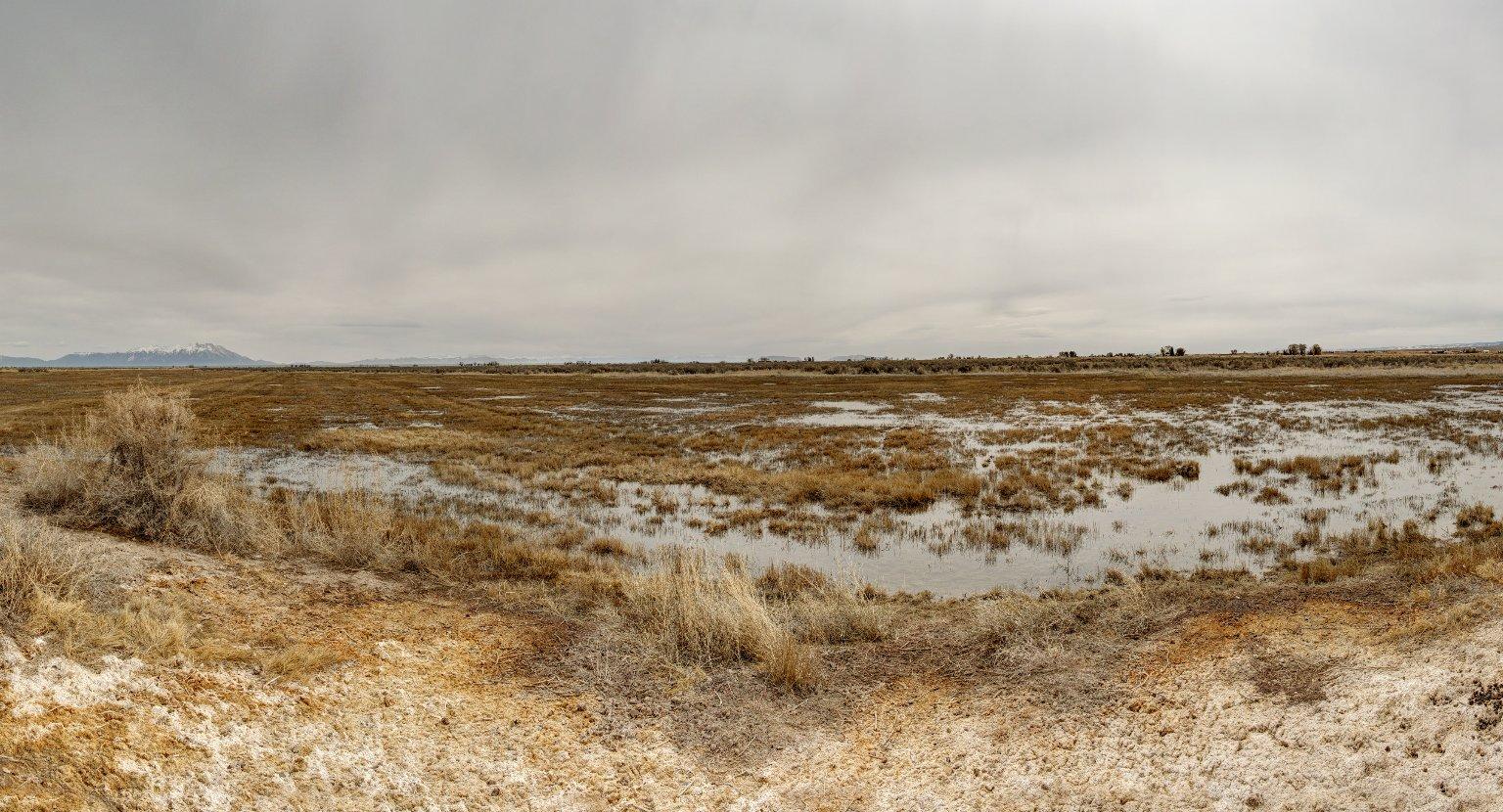 Field Location for the Sandhill Crane Diorama.
