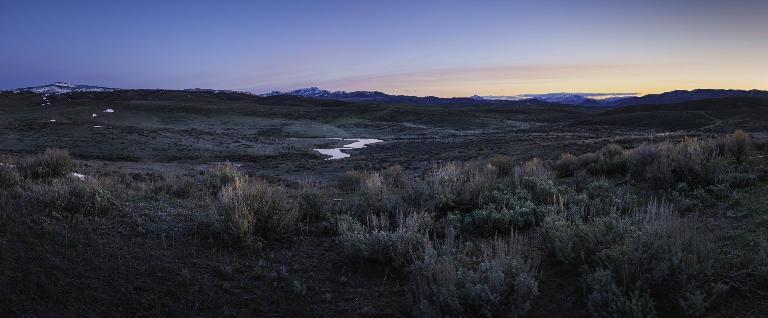 Field Location for the Sage Grouse Diorama.
