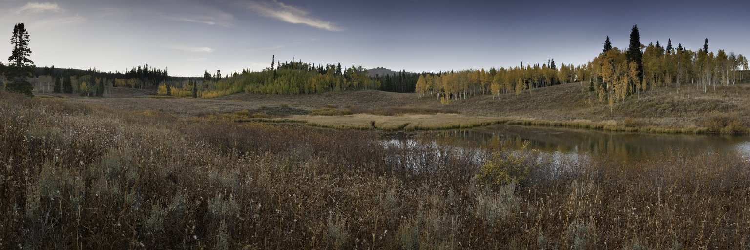 Field Location for the Beaver Diorama.