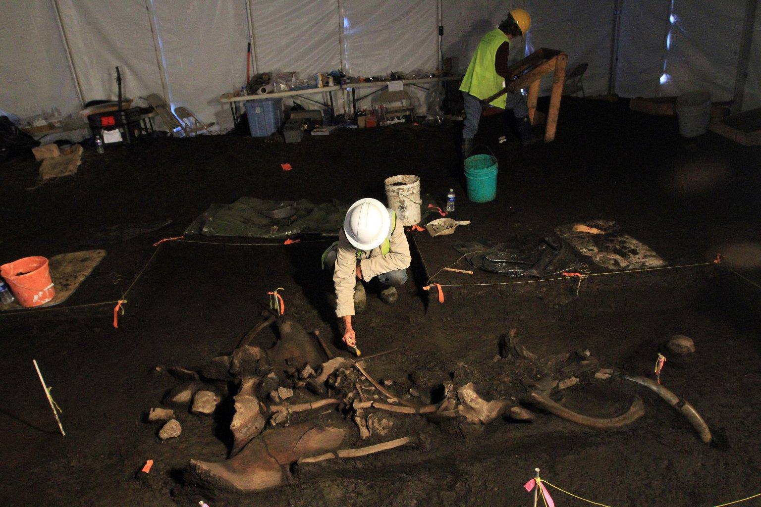 Snowmastodon Excavation, Juvenile mammoth