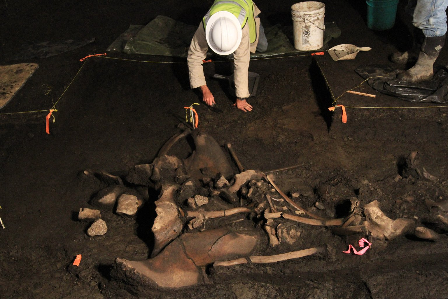 Snowmastodon Excavation, Juvenile mammoth