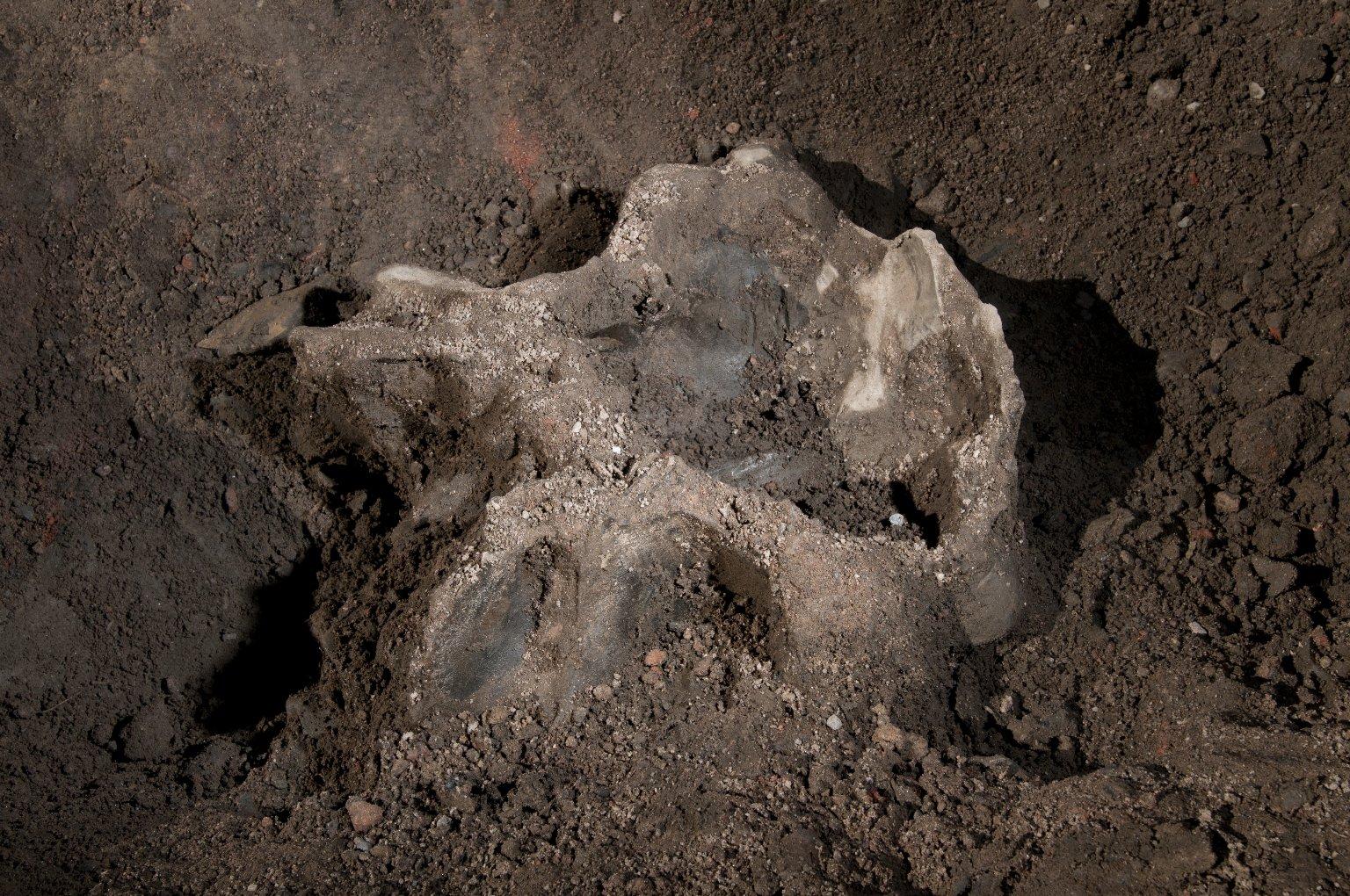 Snowmastodon Excavation,Fossils
