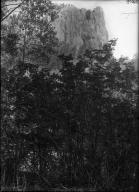 Mt. Ash