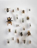 Colorado Bees