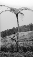 Filipino male climbing a tree