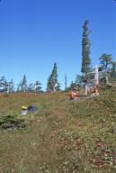 Field trip for Montague Island diorama